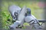 BIRDS 2010&2011