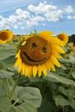 Deborah Lewis Smiling Sunflower.jpg