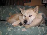 She Got Her Own Pillow.jpg