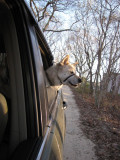 Goin For a Ride.jpg