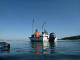 Tisbury Shellfish Department.jpg