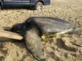 Beached Turtle.jpg