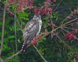 A Bird in the Bush.jpg