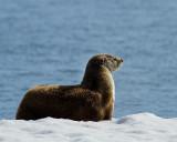 Otter Profile 2.jpg