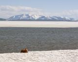 Otterscape.jpg