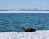 Otterscape 2.jpg