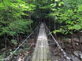 Bridge Through the Trees.jpg