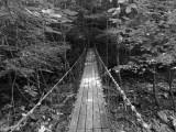 Bridge Through the Trees Black and White.jpg