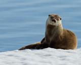 Otterly Annoyed.jpg
