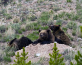 Quad Mom with Two Cubs on a Boulder at Swan Lake Flats 2.jpg