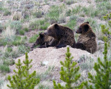Quad Mom and Cubs Waking Up.jpg