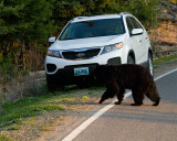 Black Bear Passing by my Rental Car.jpg