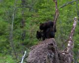 Bear on My Back.jpg