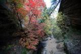 Hidden Canyon Autumn Leaves