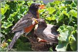 Female Feeding