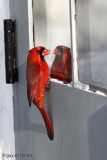 Cardinal Seeing a Competitor (part 4): It's strange how he looks like me ….