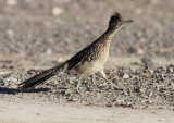 Birds USA 2010
