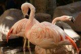 Flamingo Habitat at the Flamingo Hilton