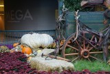 Bellagio Conservatory ~ Giant Pumpkins