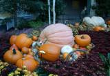 Bellagio's Autumn Display