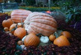Bellagio Autumn Display