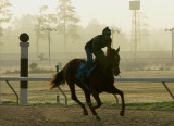 DELTA DOWNS ~ HORSE RACING GALLERY