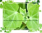 THE LOVE OF GARDENING