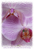 HOW CAN YOU NOT LOVE ORCHIDS?
