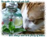 I DO LOVE CATS