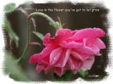 I LOVE RAINDROPS ON ROSES