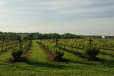 Dawn at the Pleasant Hill Winery