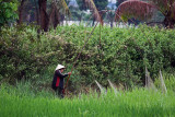 Fishing in the rice paddies after the rain