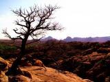 Point of Rocks  in Arizona