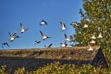 A Screech of Gulls