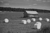 Midsummer Hay