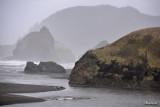 Seals at River Mouth