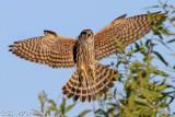 Birds of the Bolsa Chica Wetlands