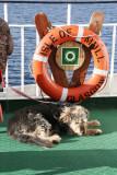 Mull ferry