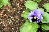 Spring colors, Chicago Botanical Garden