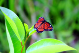 Butterfly, Everglades National Park, Shark Valley, Florida