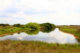 Everglades National Park, Shark Valley, Florida
