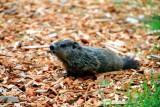 Animals of the Nature Trail, Grand Geneva Resort and Spa