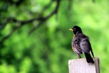 Bird, Grand Geneva Resort and Spa