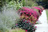 The Alene Grossman Arbor and Flower Garden, Minneapolis Sculpture Garden