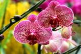 Orchids, Flower Market, Mong Kok, Hong Kong