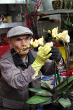 Arranging flowers, Flower Market, Mong Kok, Hong Kong
