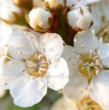 Chicago Botanic Garden - flower macro