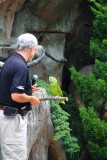 Cincinnati Zoo - Parrot