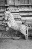 Horses steering the chariot in the front, Sculpture, Sarangapani Temple, Kumbakonam, India