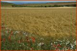 crops02 copy.jpg